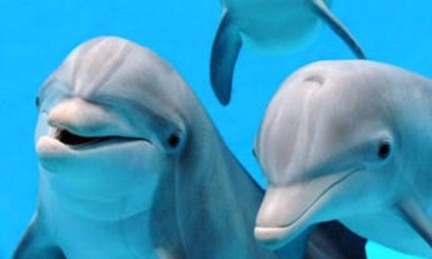 Artificial Intelligence to unlock the Dolphin Language – so we can Talk to them.