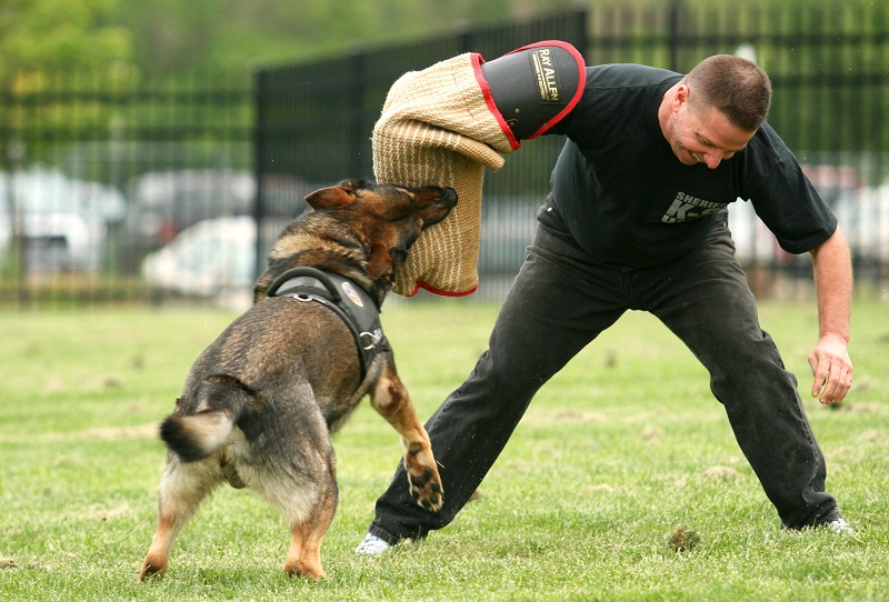 Trained Attack Dogs For Sale Uk