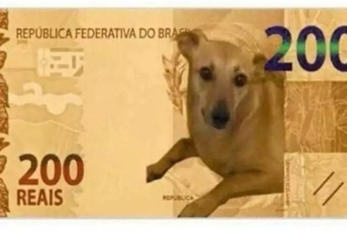 Nota de 200 reais com a imagem do cachorro vira-lata de cor parda