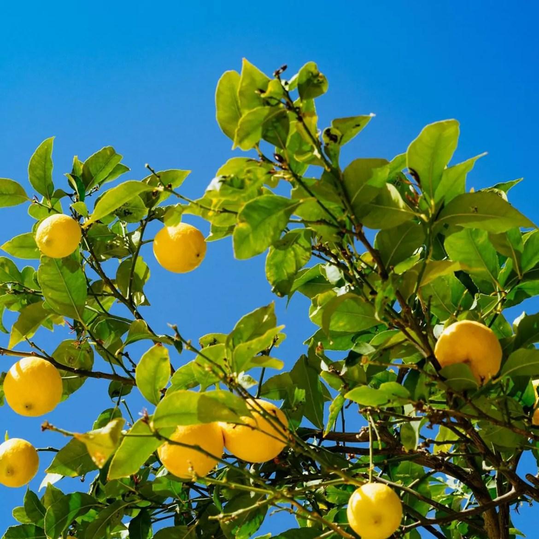 Bolo de caneca low carb de limão
