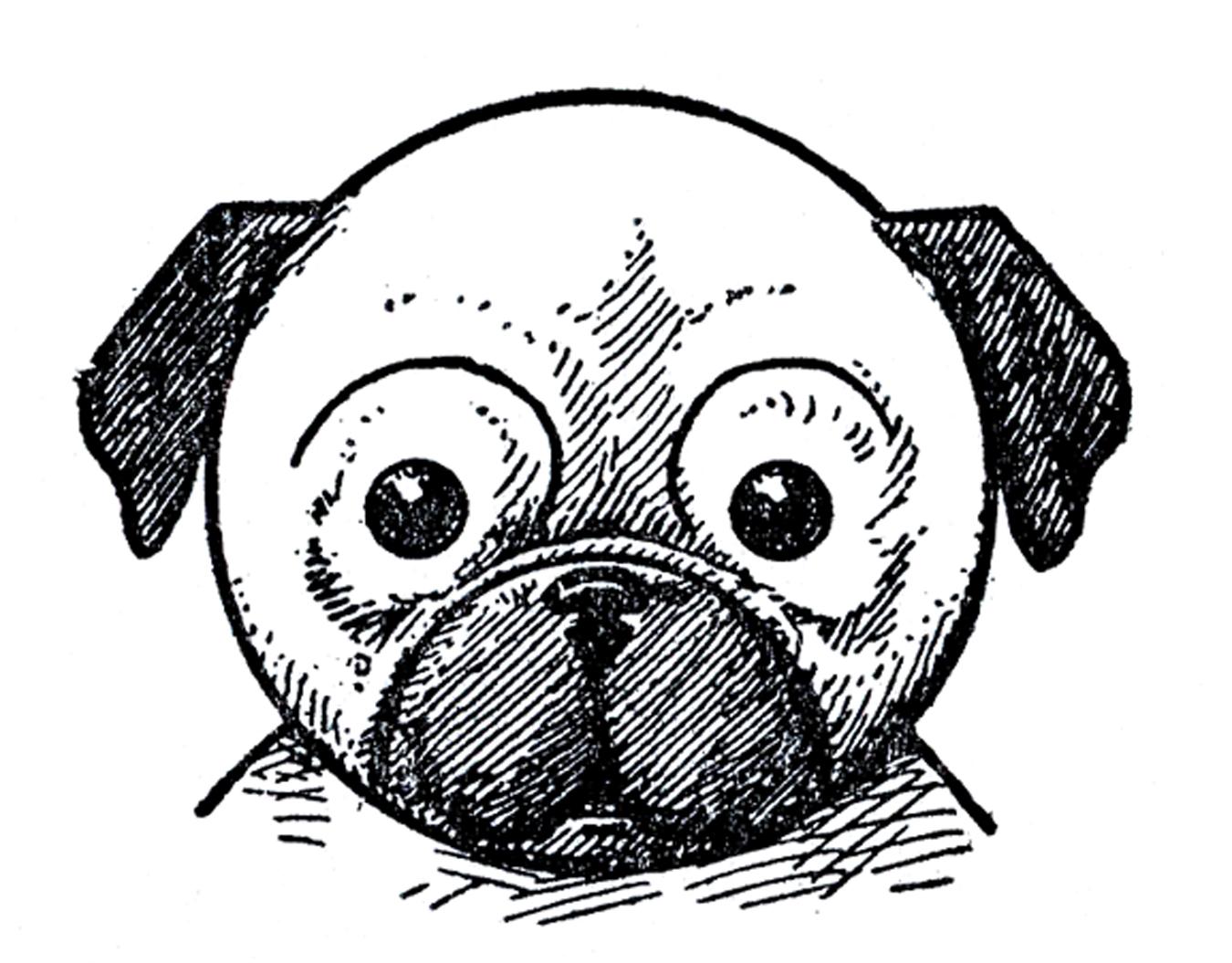a dog face