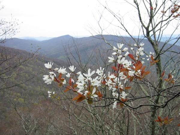 native plants conservation