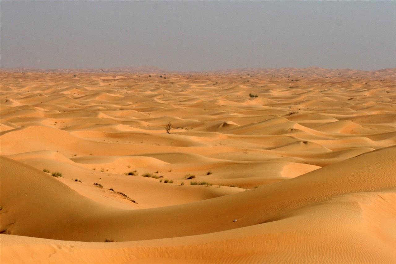 types of sand dunes diagram heredity family tree my stomach pancreas elsavadorla