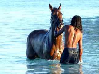 Horses Karibik