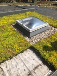Green roofs keep buildings cooler