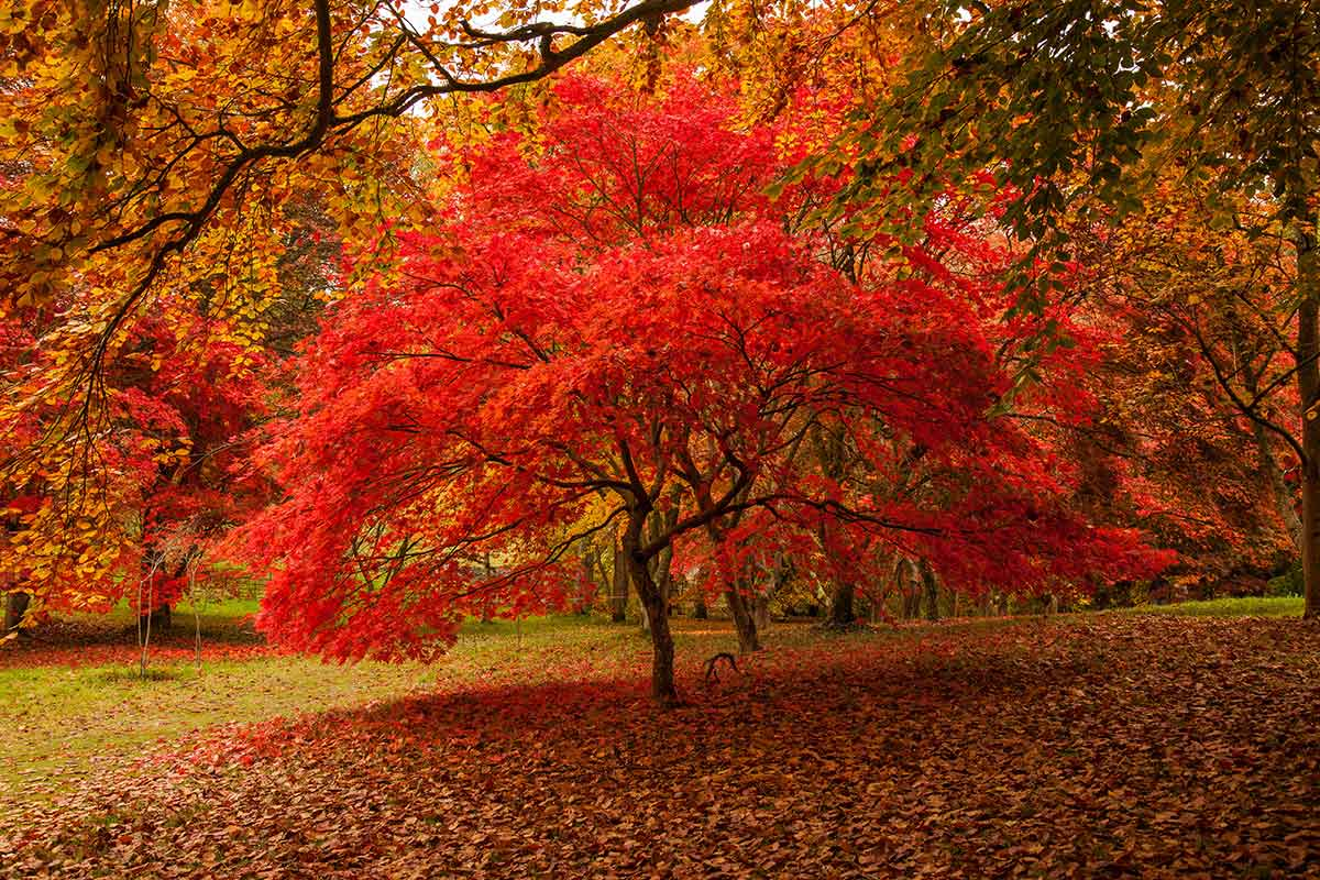 Autumn colour tress