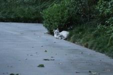 Feral Cat of Disneyland