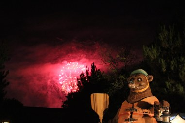 Bear and fireworks