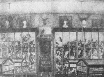 The collection in the school museum, 1890