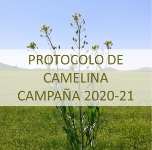 camelina, campaña 2020-21