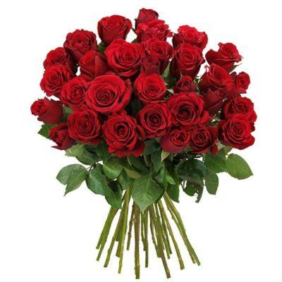 40 rote Rosen fr 2494 inkl Versand