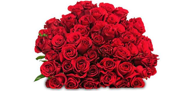 Blume Ideal Rosenstrau in rot oder bunt fr kleines Geld