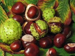 Many herbal remedies, including horse chestnut, can help relieve varicose veins, and cold hands and feet that are part of Raynaud's phenomenon. Deanne Greenwood, a medical herbalist who practices in Cornwall but also offers consultations by telephone and Skype, suggests a few home remedies, as well as explaining how herbal medicine can help at a deeper level.