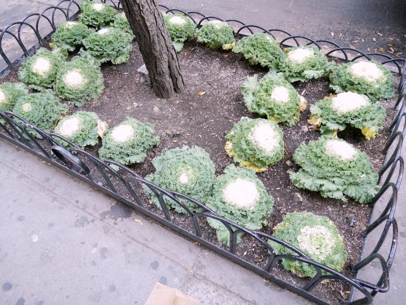 Newyorkfood55