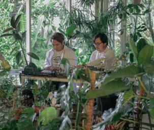 musik untuk tanaman