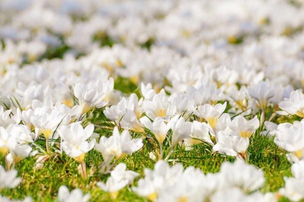 Comment avoir des fleurs toute l'année dans son jardin ?