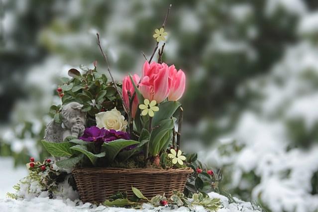 entretien de jardin en hiver