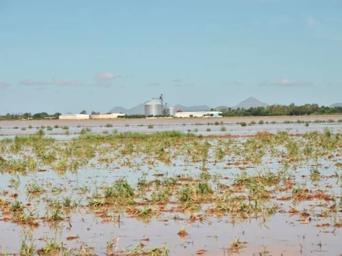 The field of Escuinapa after the passage of hurricane Willa. (María Elena Ibarra)