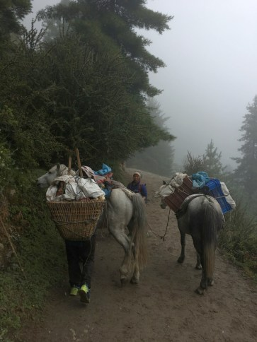 Dzopkyos and porters along the trail
