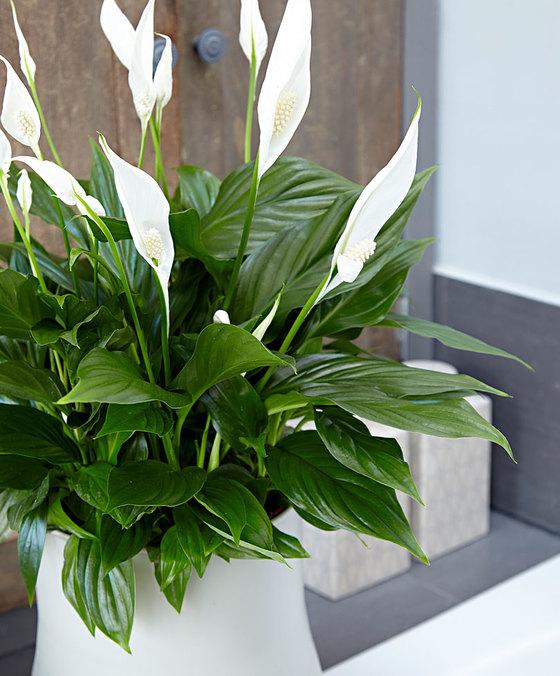 Kamerplanten die de lucht zuiveren dit is onze top 5