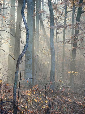 Light Shining Into Woods