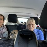 Border Terrier in Car