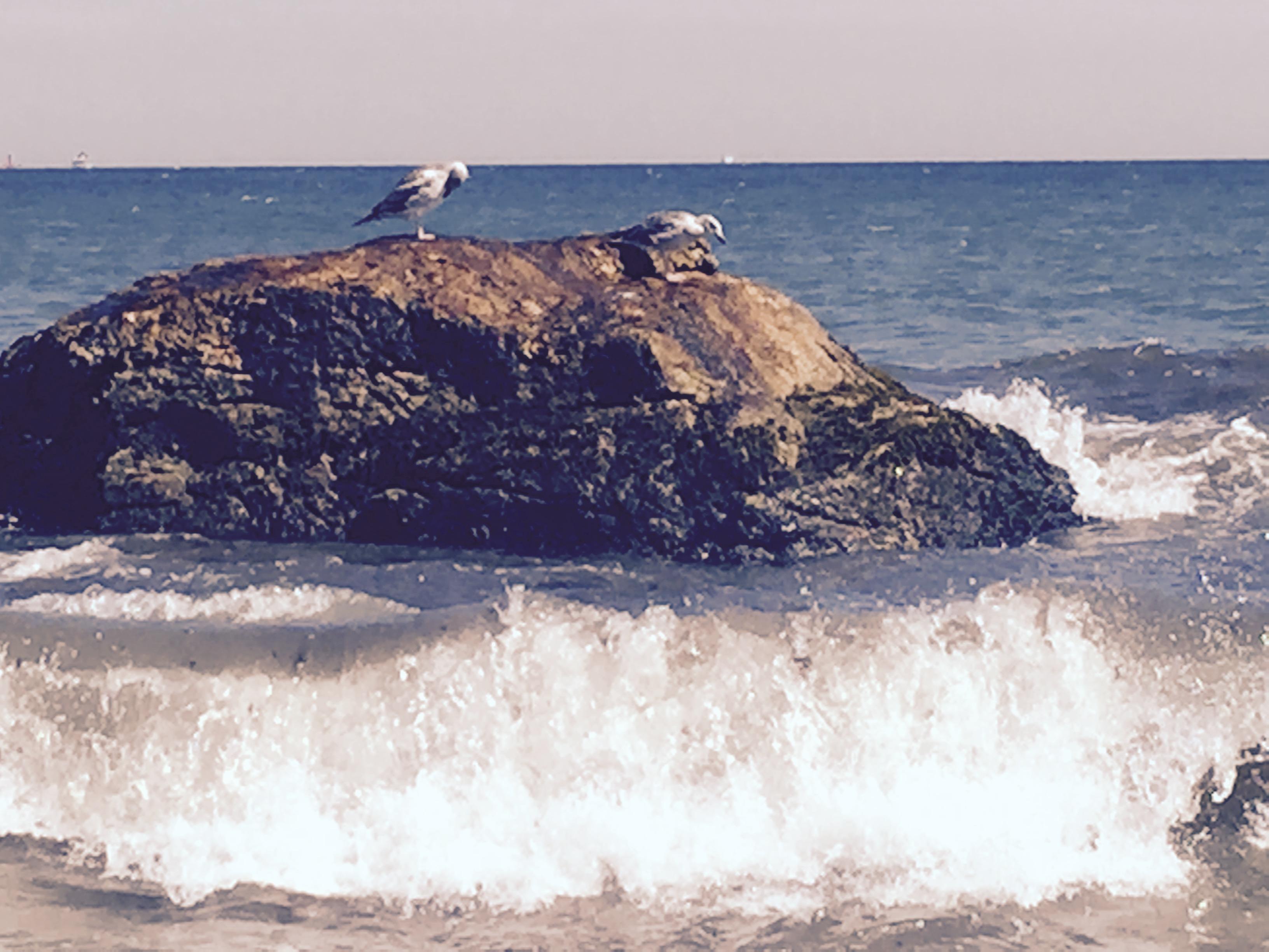 Beach Blog …