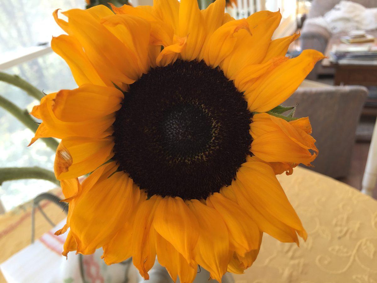 Sunflowers And Politics