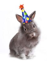 Birthday Bunny