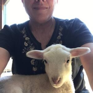 Blossom the Lamb