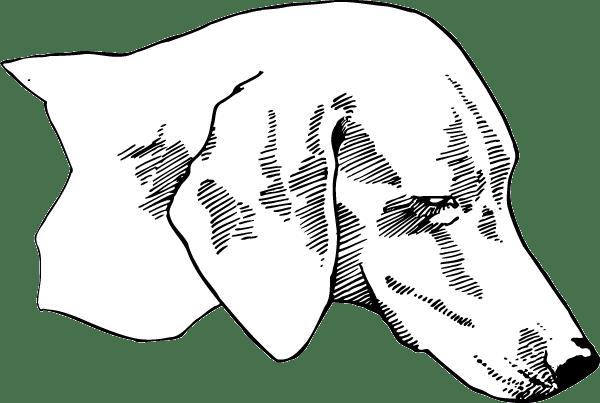 Dachshund Head Decal
