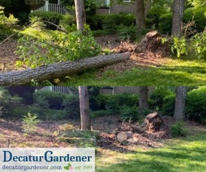 Decatur Gardener Tree Debris Removal