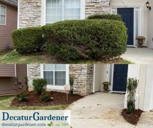 Decatur Gardener Trimming Planting and Mulching