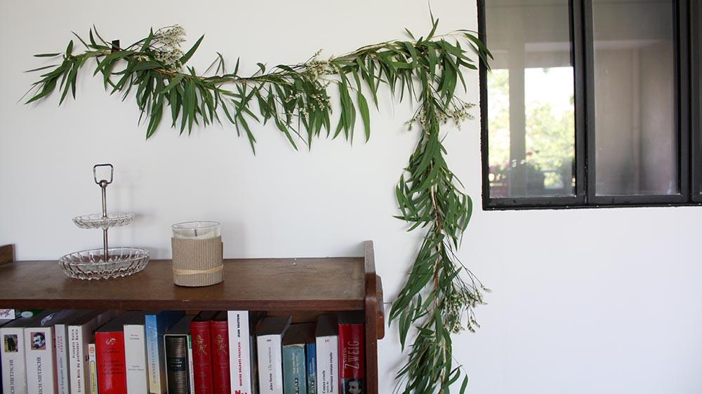 l eucalyptus le feuillage qui change