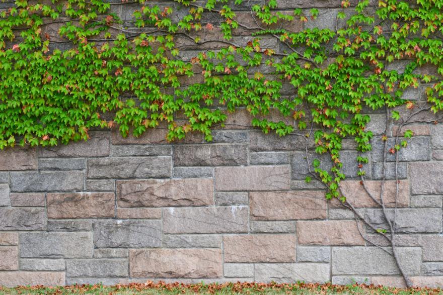 comment cacher un mur dans le jardin