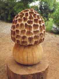 L-univers-du-champignon Une-morille-gigantesque