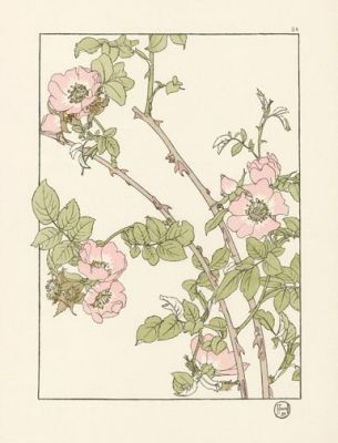 foord-pochoir-flower-studies-1901