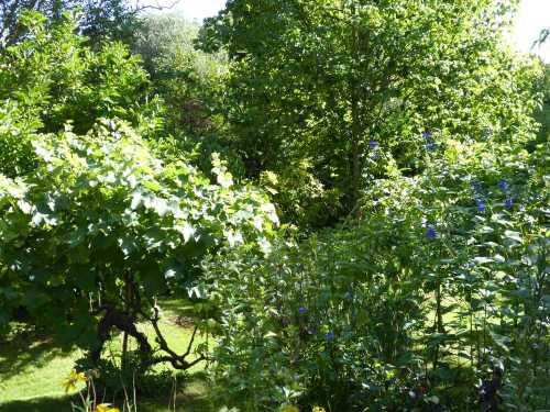 2017-08_Poitou_prieure_Laverre_Aslonnes_jardin_vigne