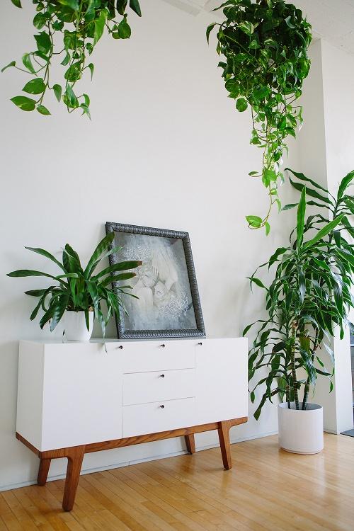 Focus comment d corer avec des plantes d 39 int rieur decocrush - Comment disposer une chambre ...