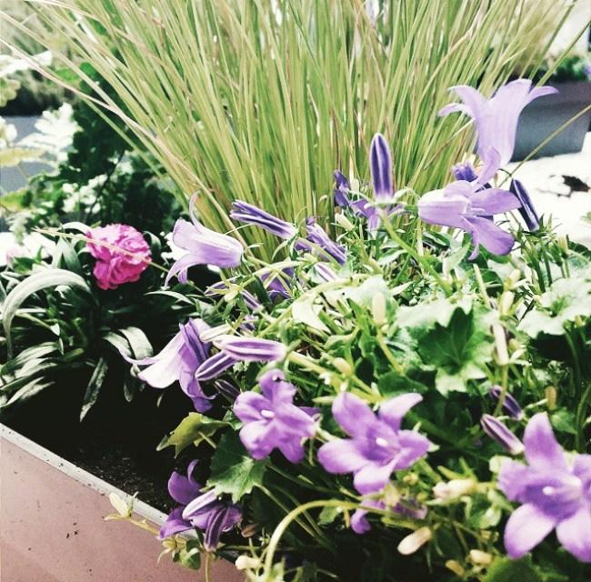 jardin d'hiver decocrush x brin de jardin