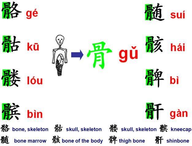 Radical bone 骨 gǔ