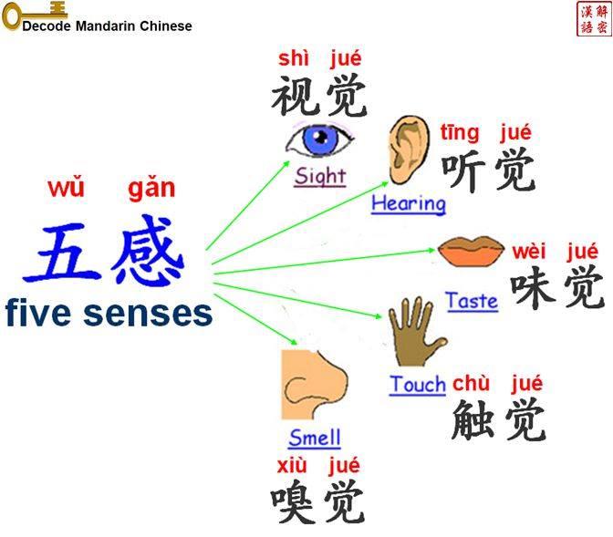 Five senses 五感