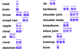 English-Chinese vocabulary for the human body