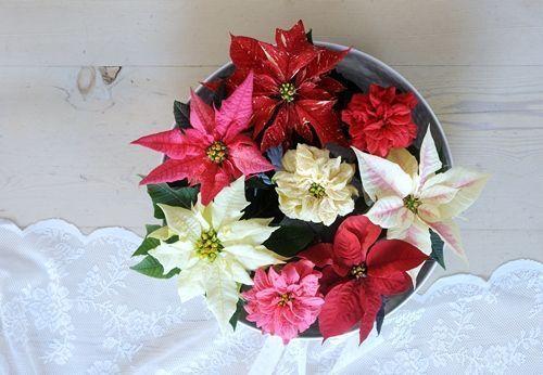 decoracion de navidad con flor de pascua 2