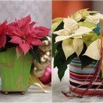 Arreglos de Navidad con flor de pascua de estilo vintage 4