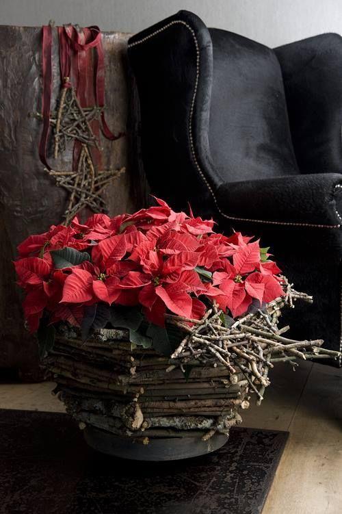 Cómo hacer arreglos de flores originales con flor de Pascua 2