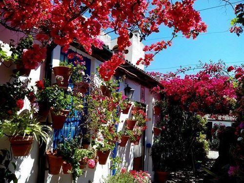 precioso patio cordobés en flor