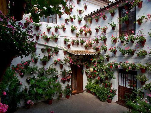 concurso de patios de Córdoba