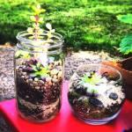 Hacer terrarios de plantas crasas con tarros de cristal 2