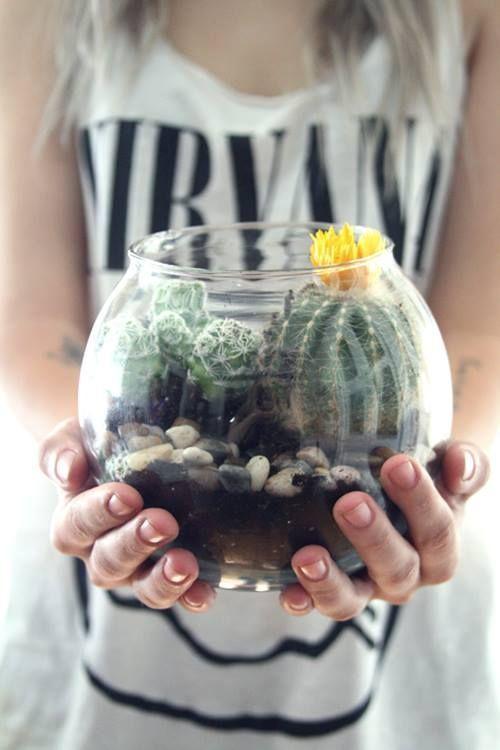 Hacer terrarios de plantas crasas con tarros de cristal 3